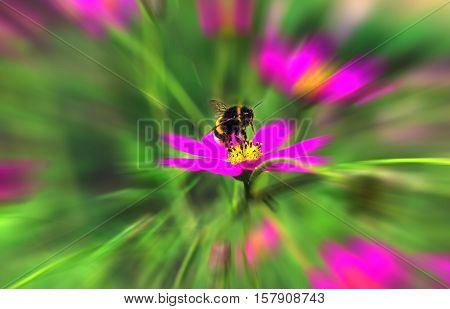 insect bumble bee flying to a pink flower