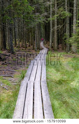 Planked Trail Through Thick Forest