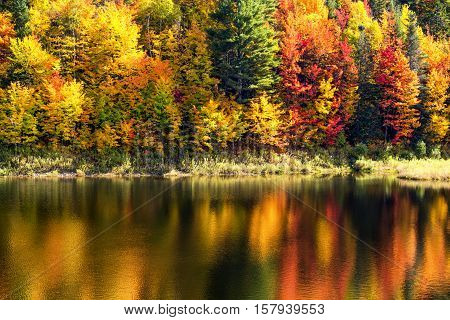 Tree lined reflective lake in Vermont during peak foliage season