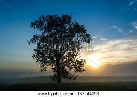 Solo tree on a foggy morning in the Trinity River Dallas Texas during sunrise
