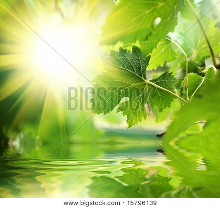 Fresh green leaves over water
