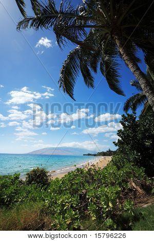 Palm trees at beautiful tropical beach in Hawaii