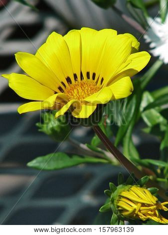A Yellow Flower With Blurred Back Ground 12aa