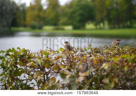 Sparrow in garden. Funny and beautiful birds around. Birds cute birds in nature. The life of wild animals.