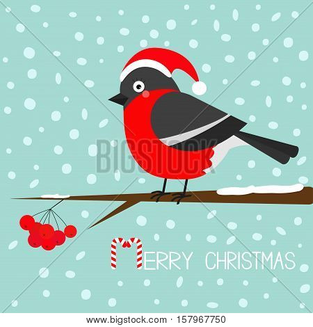 Bullfinch winter red feather bird sitting on rowan rowanberry sorb berry tree branch. Santa hat. Cute cartoon funny character. Baby collection. Flat design. Blue snow background Vector illustration