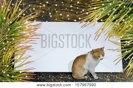Christmas card with envelope and pine branches and cat.Snow drawn.Selective field of focus