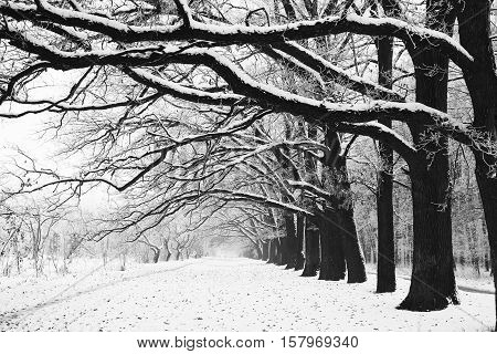a Winter tree trunk in nature in winter