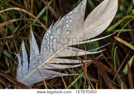 White goose feathers lying in a meadow