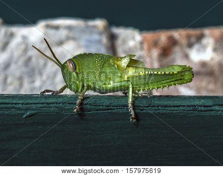 big green cricket on a  green wooden door