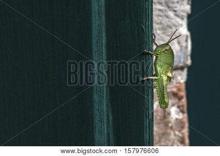 big green cricket ona  green wooden door