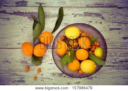 Citrus Fruits View From Above