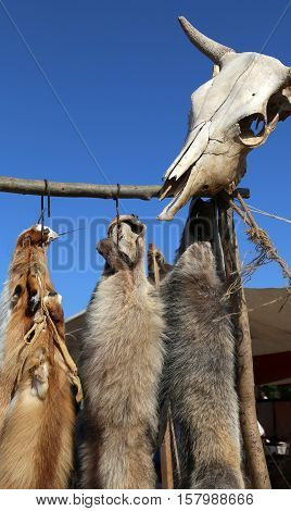 Wild animal tanned furs and a skull in a hunting settlement
