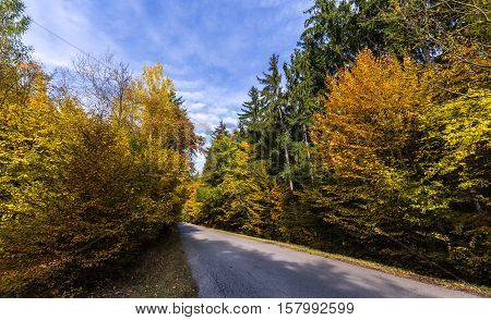 Straight road and colored leaves on trees. Colorful autumn and Moravian landscape Velenov.