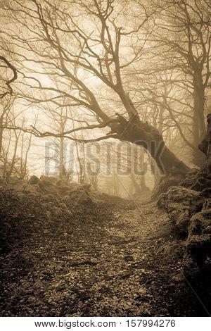 Secret pathway in the dark forest with fog