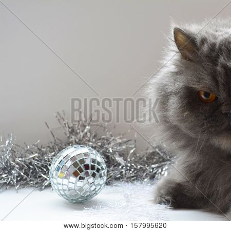 year of the cat, Persian cat among the Christmas toys