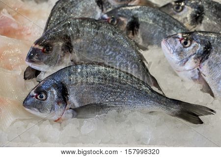 Fresh sea bass on ice in the greek fish shop lined up for sale. Sea bass fishes on ice. Horizontal. Daylight. Close up.