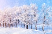 Winter landscape with falling snow- winter wonderland with winter snowfall and sunlight over winter landscape. Snowy winter landscape in the winter forest-winter scene with Christmas and New Year mood poster