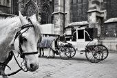 Carriage with a white horse in the Cathedral of Vienna. poster