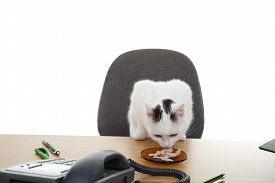 cat sits near desk and eat meat