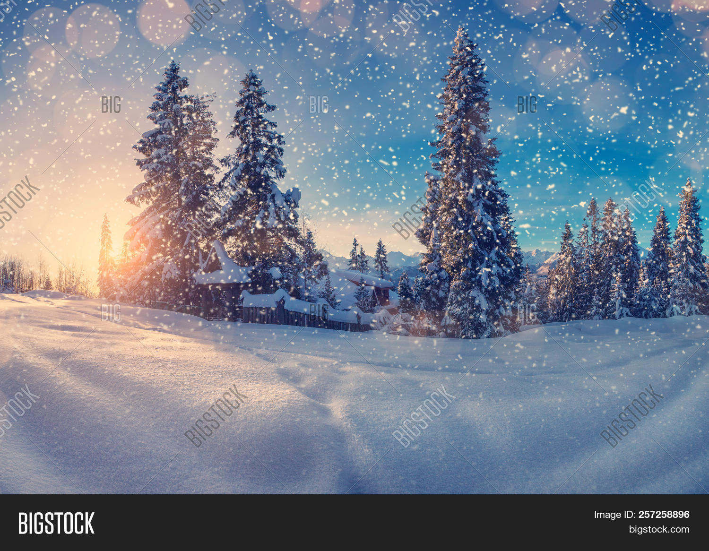 Mountain Christmas Tree.Christmas Holiday Image Photo Free Trial Bigstock