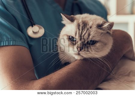 Professional Veterinarian Holding Cute Sad Cat. Doctor Veterinarian Is Holding Cute White Cat On Han