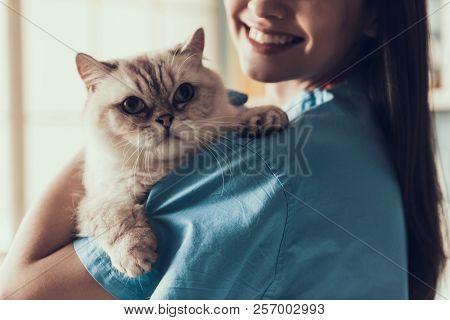Smiling Professional Veterinarian Holding Cute Cat. Female Doctor Veterinarian Is Holding Cute White