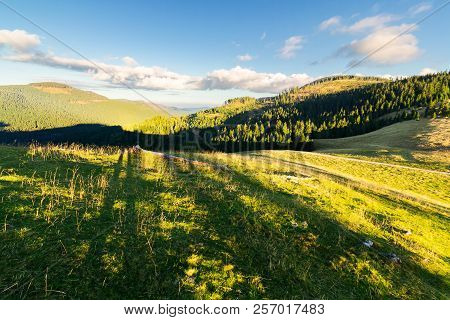 Autumn Landscape In Mountains At Sunset. Beautiful Sky With Fluffy Clouds Above Spruce Forest On Hil