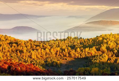Beautiful Autumn Landscape In Mountains. Cloud Inversion Above The Valley And Yellow Trees In Sunlig