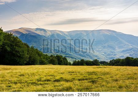 Grassy Alpine Glade Among The Beech Forest In Mountains. Beautiful Scenery At Dusk. Wonderful Nature
