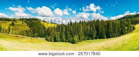 Countryside Panorama In Early Autumn. Lovely Landscape With Spruce Forest On The Grassy Hill. Beauti
