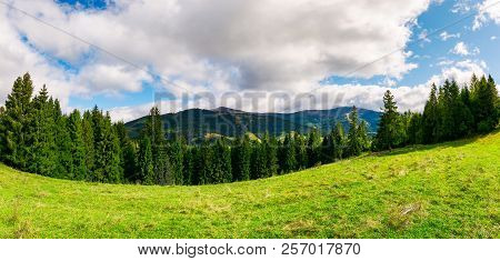 Panorama Of Alpine Meadow In Forest On Hill. Beautiful Early Autumn Landscape In Carpathian Mountain