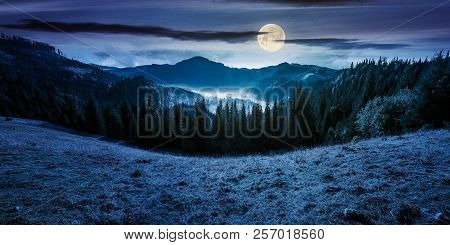 Panorama Of Mountain And Foggy Valley. Beautiful Landscape With Spruce Forest On The Hill. Wonderful