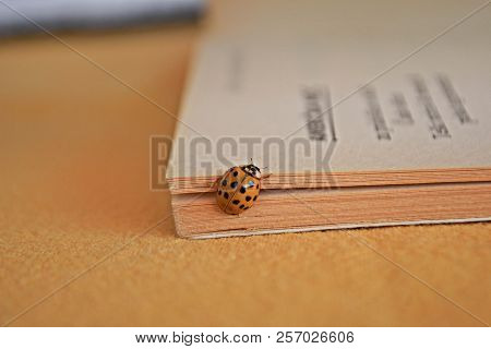Closeup Of Little Yellow Ladybug Walking Between Book Pages/ Conceptual Image Of Education/ Conceptu