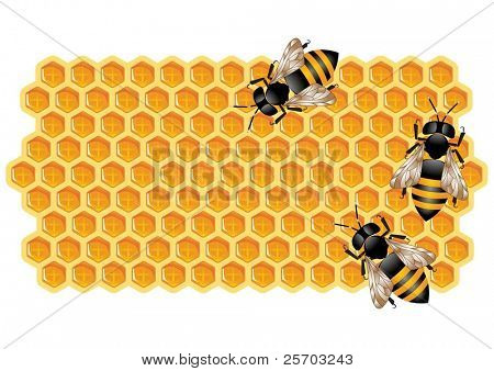 Honeycomb and Working Bees