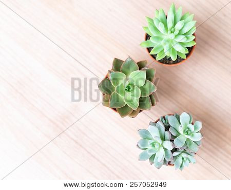 Closeup Top View Green Succulent In Pot On Wood Table Background, Decoration Plant Concept