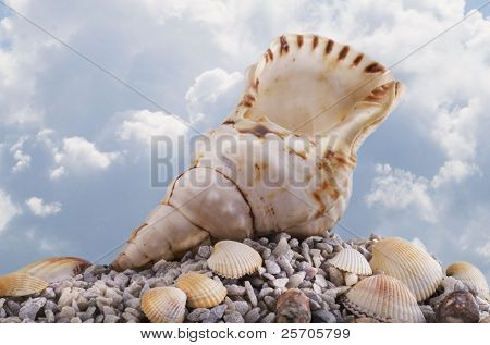 Seashell at the seashore.