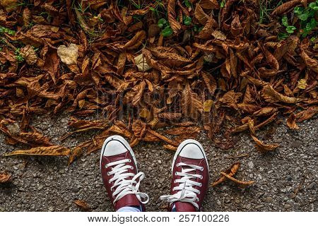 Fall, Autumn, Leaves, Legs And Sneakers. Conceptual Image Of Legs In Sneakers On The Autumn Leaves.