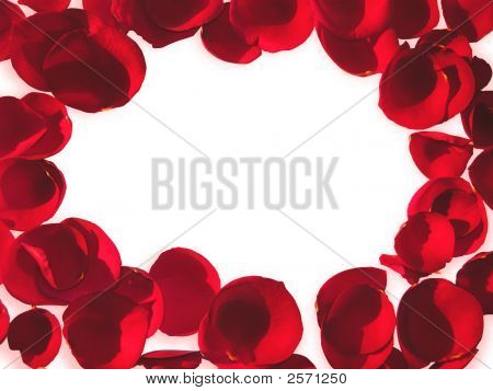 Rose Petals On White Background