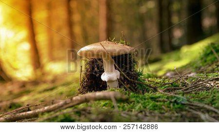 Mushroom Russet Autumn Moss Marsh Swamp, Mushrooms In The Forest.