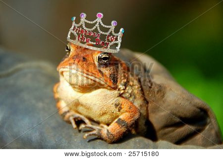 Frog With Princess of the Day Crown