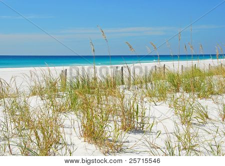 Sand Dunes and Sea Oats by Beautiful Ocean