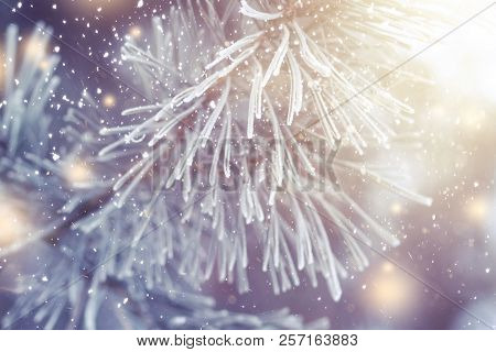 Christmas Background. Xmas Theme. Christmas Tree Branch With Hoarfrost Closeup And Festive Lights Wi