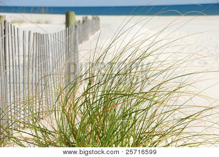 Sea Grasses next to sand dune fence on beach