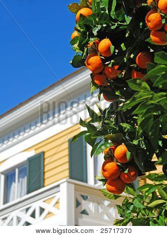 Coastal building with fresh oranges growing nearby