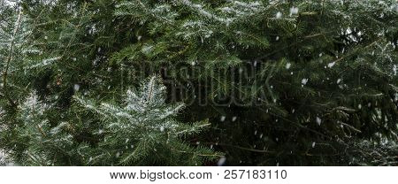 Winter - Coniferous Tree And Snowflakes Flying From The Sky