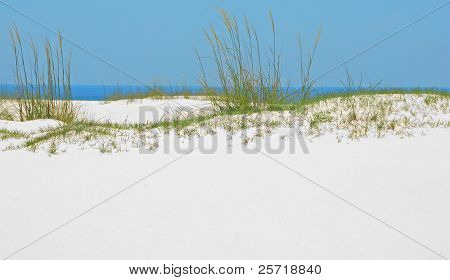Beautiful sand dune and sea grasses with pretty ocean in distance