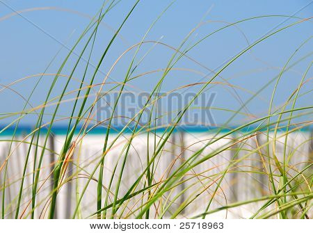 Blowing sea grasses on sand dune with fence and pretty ocean in distance