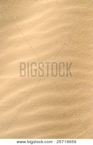 Pristine sand dune with wind driven ripples under golden sun