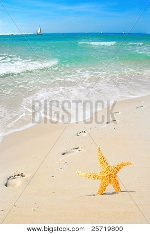 Footprints on beach by starfish with sailboats in distance