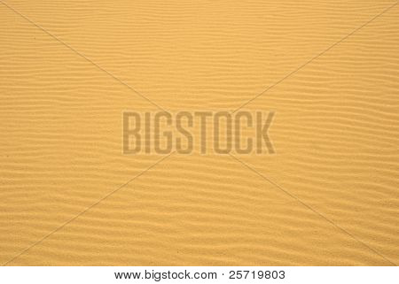 Pristine sand with wind blown ripples under golden sun